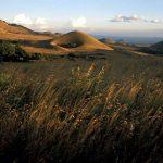 rangeland restoration