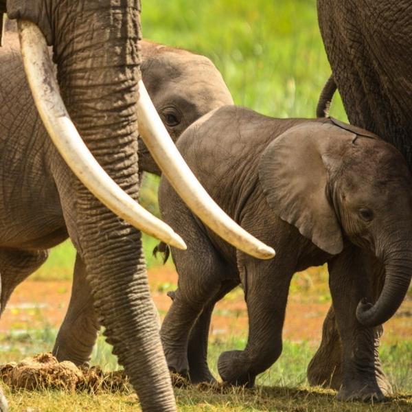 conservation programs elephant